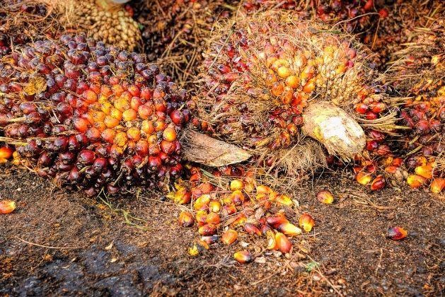 Dampak dari harga sawit murah dirasakan pedagang sembako di pasar sentral sanggau.