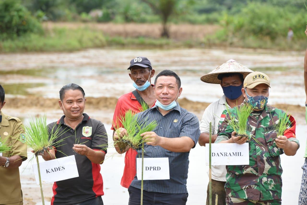 Anggota DPRD Kabupaten Sanggau Ikut Tanam Padi di Desa Sosok