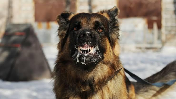 5 Orang  Di Gigit Anjing Dinkes Minta Masyarakat Waspada